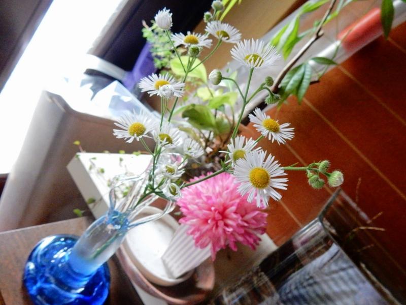 2015/06/19/ヒメジョオン1