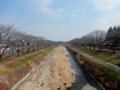 2016/03/04/桜並木1