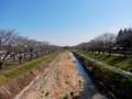 2016/03/21/桜並木1