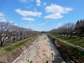 2016/03/25/桜並木1