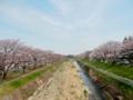 2016/03/31/桜並木1