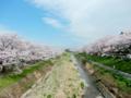 2016/04/06/桜並木1