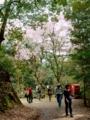 2016/04/09/サクラ「八重紅枝垂」&「枝垂桜」