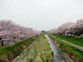 2016/04/10/桜並木1