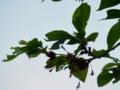 2016/04/25/桜並木2