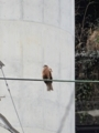 2017/03/11/鳥