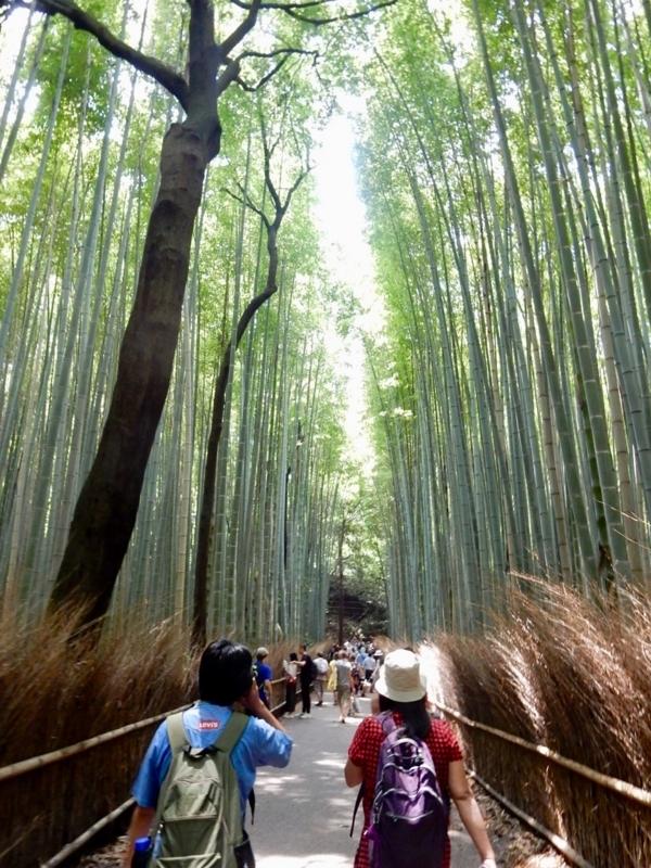 竹林の道1