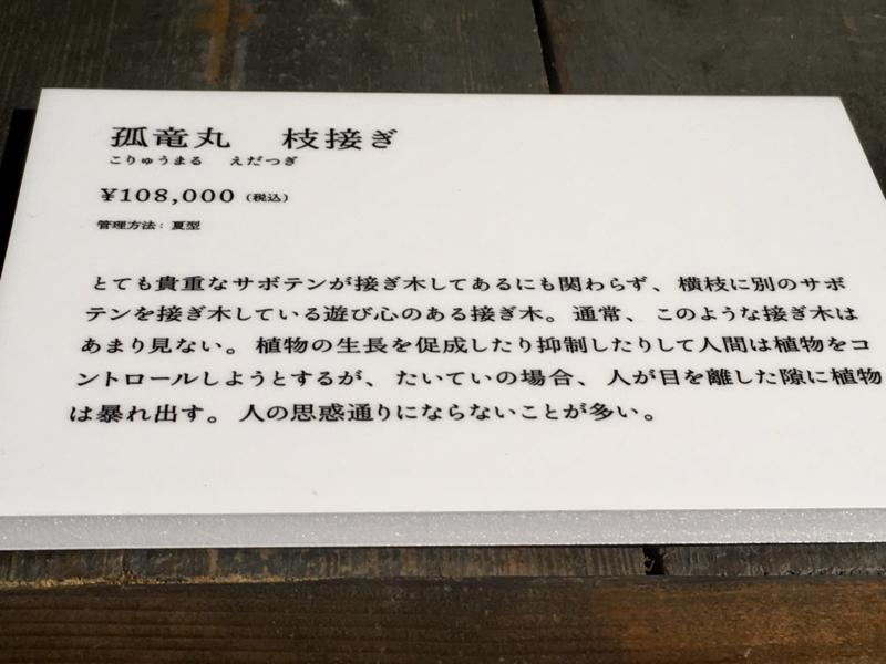 2017/06/25/サボテン「弧竜丸 枝接ぎ」2