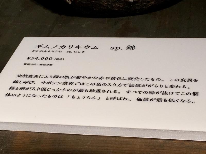 2017/06/25/サボテン「ギムノカリキウム sp.錦」2