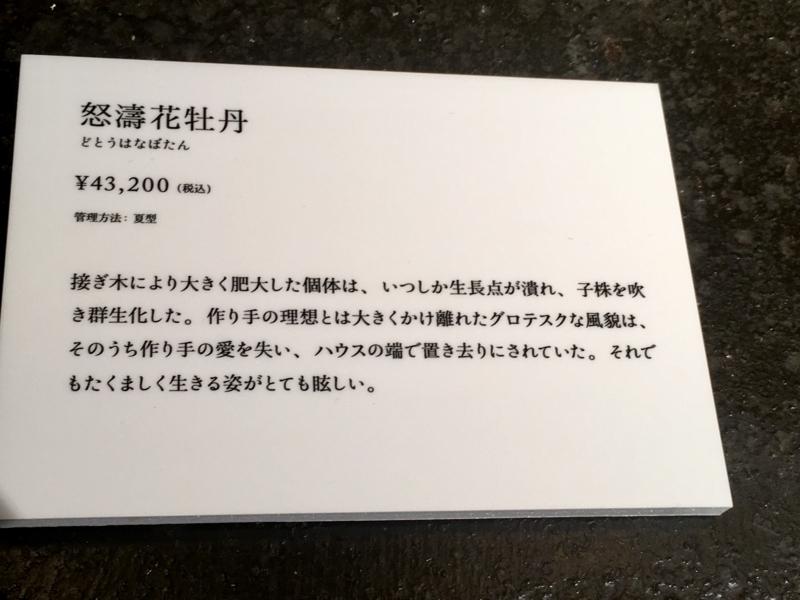 2017/06/25/サボテン「怒濤花牡丹」2