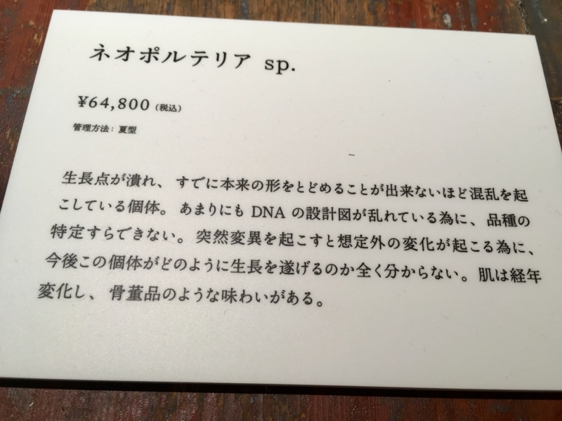 2017/06/25/サボテン「ネオポルテリア sp.」2