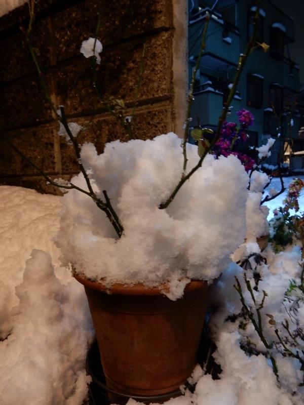 2018/01/22/雪