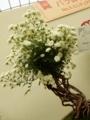 鉢植え部門ミニ大鉢「スノーインファント」