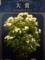 鉢植え部門大賞「ゴールデンボーダー」