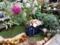 ガーデン部門10