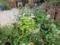 ガーデン部門11