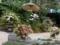 ネオ・ジャポニズム・ガーデン