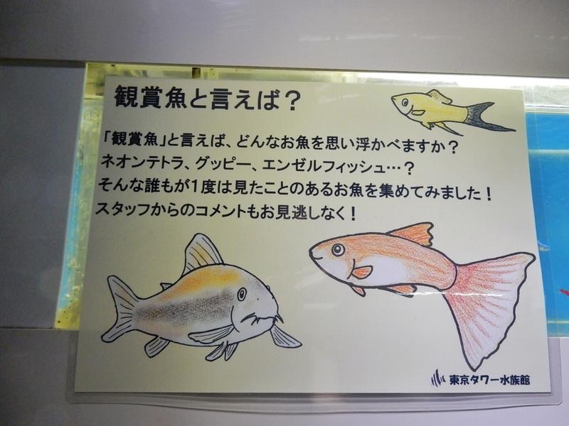 2018/09/07/観賞魚
