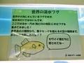 2018/09/07/淡水フグ