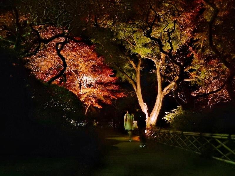 2018/11/25/ライトアップ6