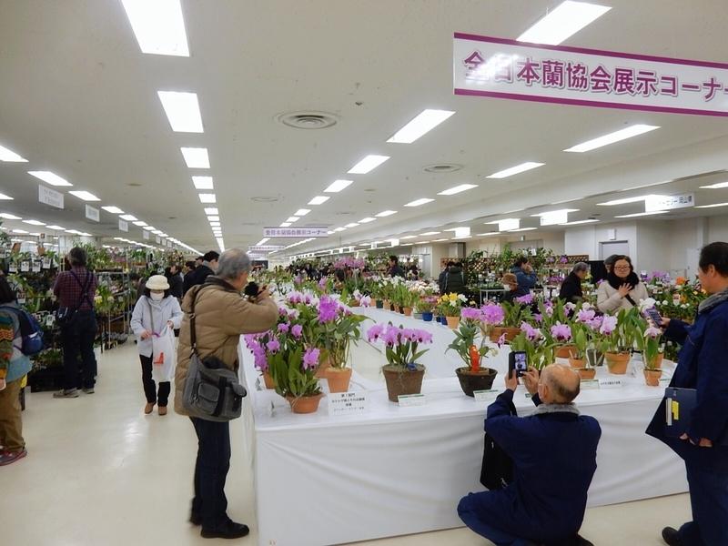 f:id:Nakano_Hitsuji:20190110140717j:plain