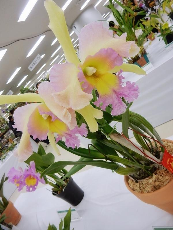 f:id:Nakano_Hitsuji:20190110142256j:plain