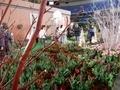 イロトリドリノ世界-華々の共宴-