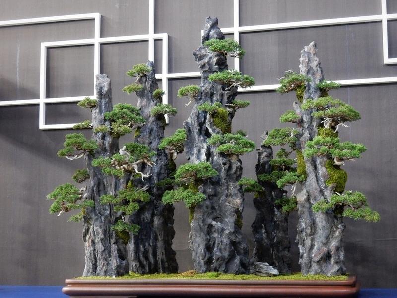 Japan Botanical Style -蘭とBONSAI-・真柏(石付)