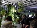 食虫植物と神秘的な花々