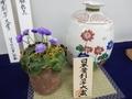 2019/02/24/ユキワリソウ、千重咲「聖雲」