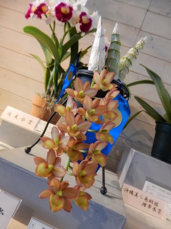 2019/03/08/フレッドクラーケアラ「Fdk. Desert Tenor 'Sunset Valley Orchids'」