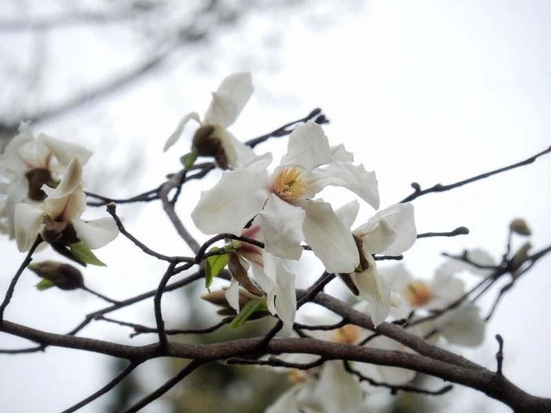 f:id:Nakano_Hitsuji:20190322145510j:plain
