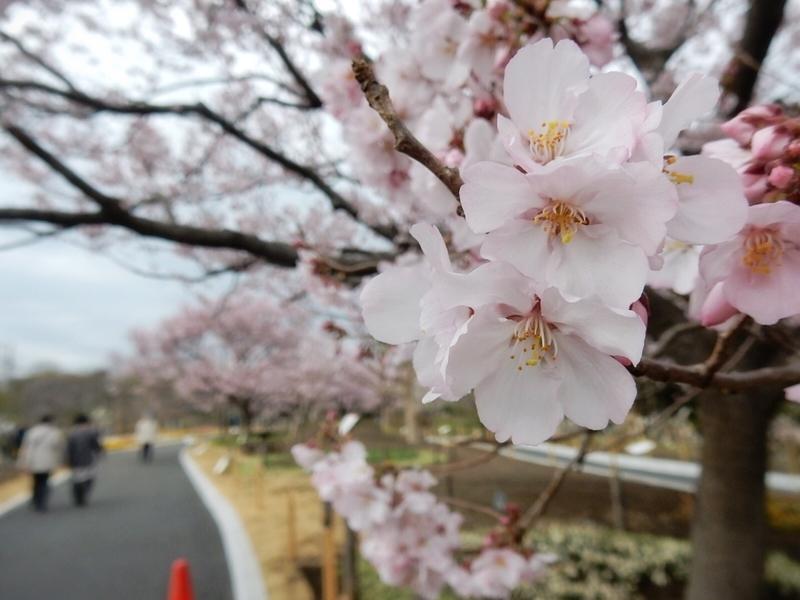 f:id:Nakano_Hitsuji:20190322150421j:plain