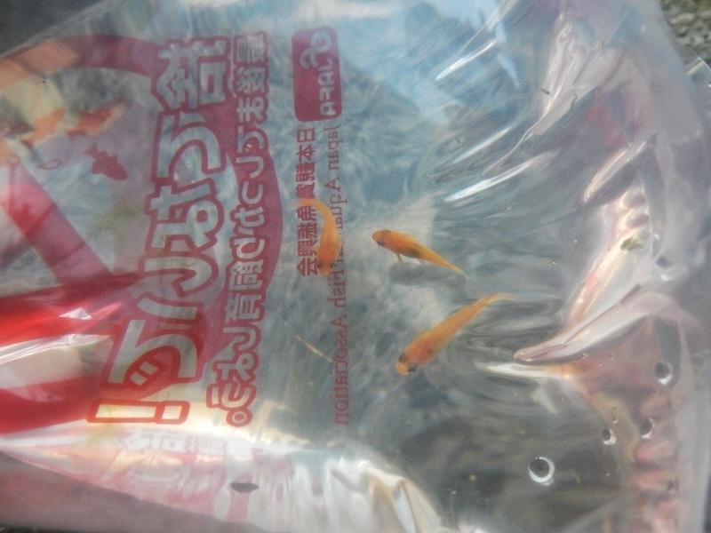 f:id:Nakano_Hitsuji:20190502170552j:plain