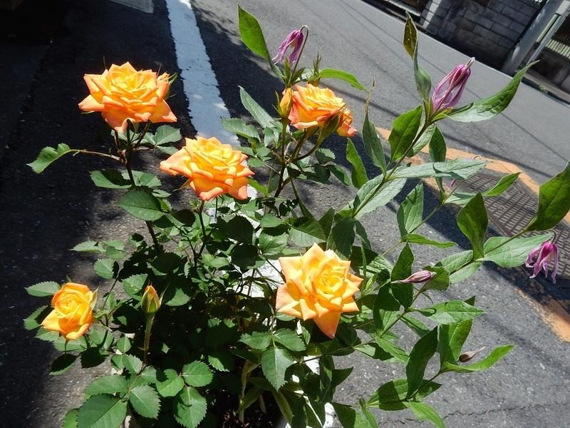f:id:Nakano_Hitsuji:20190515134851j:plain