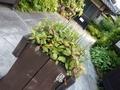 2019/06/06/植物