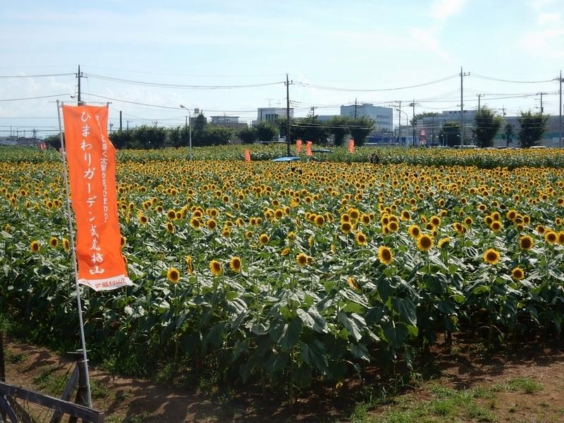 2019/08/09/ヒマワリ11