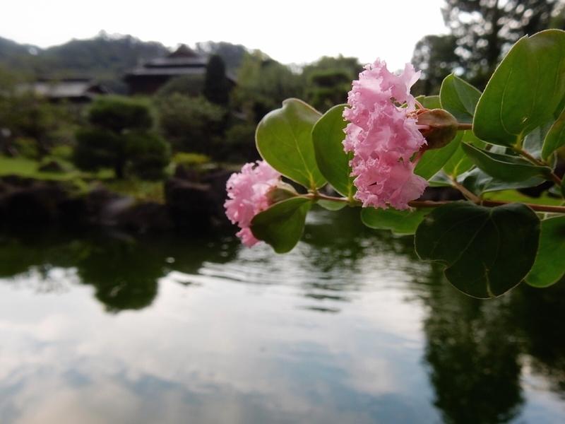 f:id:Nakano_Hitsuji:20190917155219j:plain