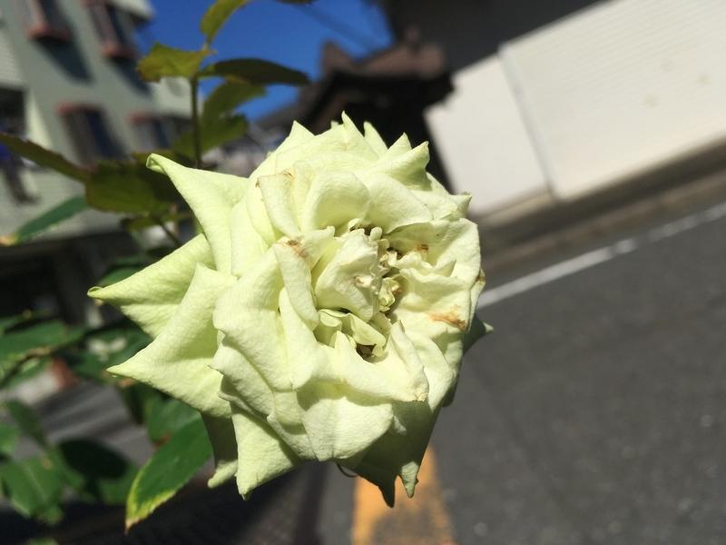 f:id:Nakano_Hitsuji:20191013113232j:plain