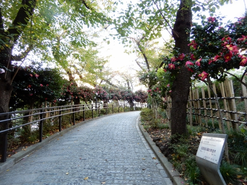 2019/11/15/五反田公園の桜並木