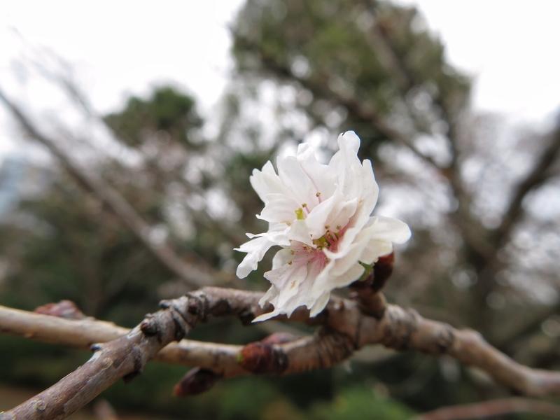 f:id:Nakano_Hitsuji:20200122124719j:plain