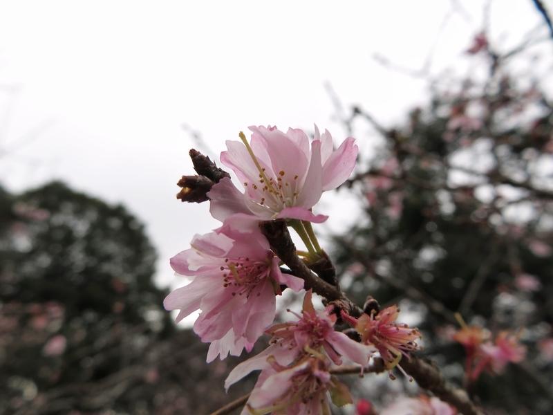 f:id:Nakano_Hitsuji:20200122125029j:plain