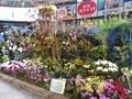全日本蘭協会「蘭の楽園」