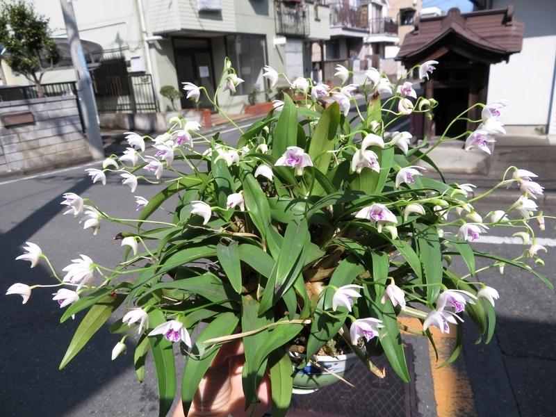 f:id:Nakano_Hitsuji:20200301112251j:plain