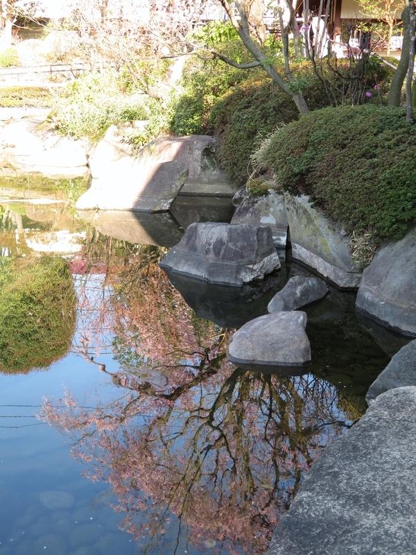 2020/03/25/サクラ「枝垂桜」2