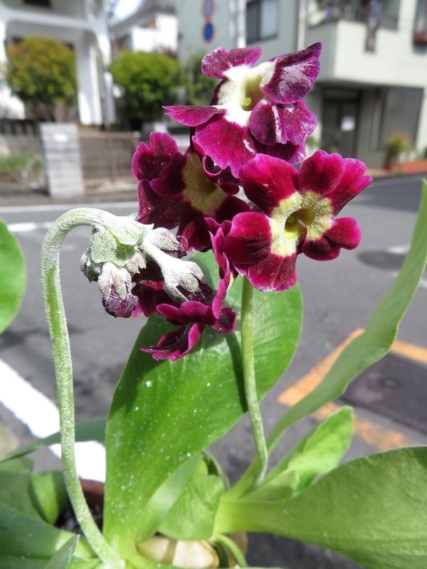 f:id:Nakano_Hitsuji:20200421085146j:plain