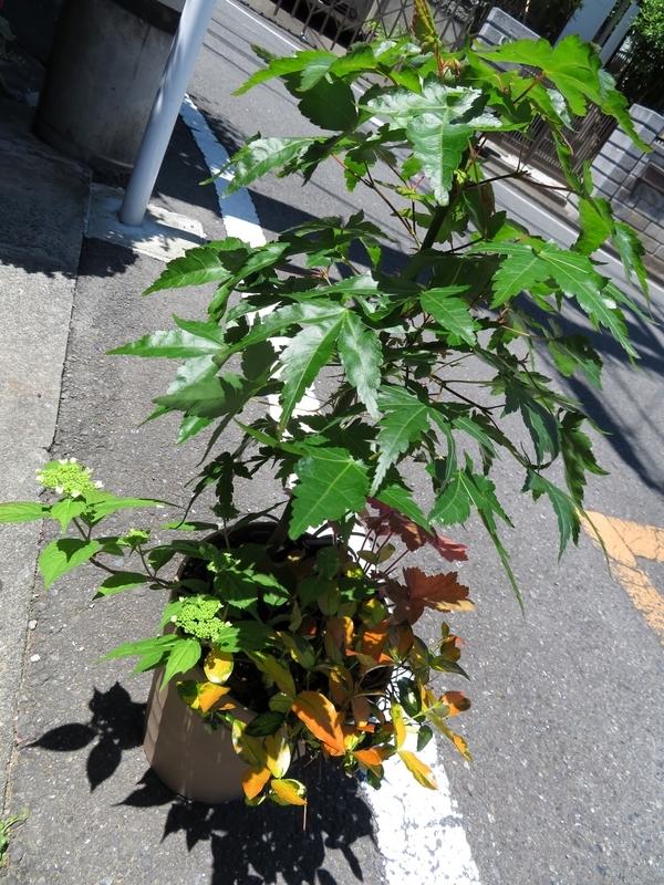 f:id:Nakano_Hitsuji:20200508114259j:plain