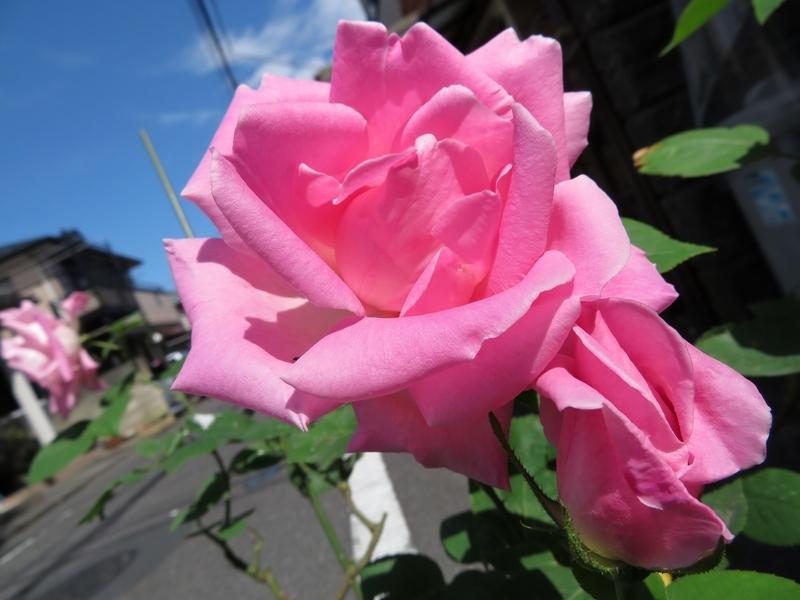 f:id:Nakano_Hitsuji:20200517142326j:plain