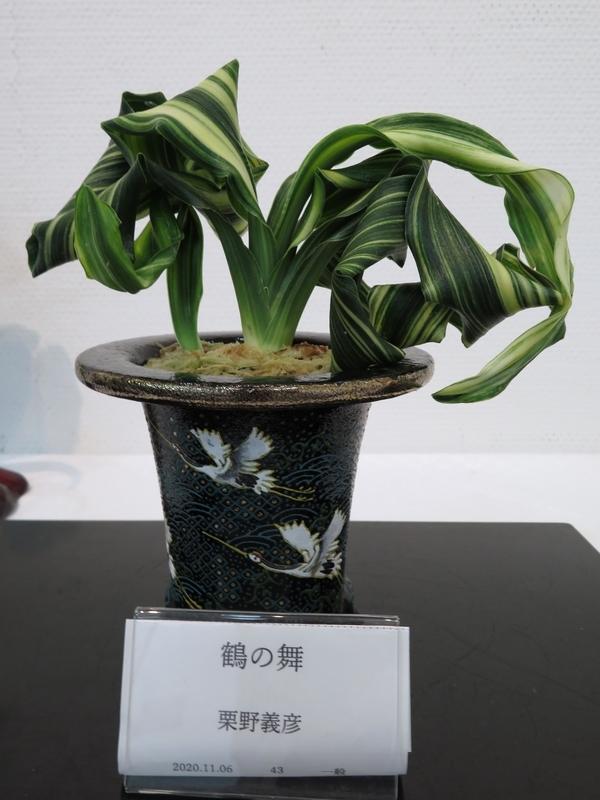 f:id:Nakano_Hitsuji:20201106160124j:plain