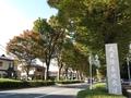 2020/11/10/武蔵陵墓地参道1